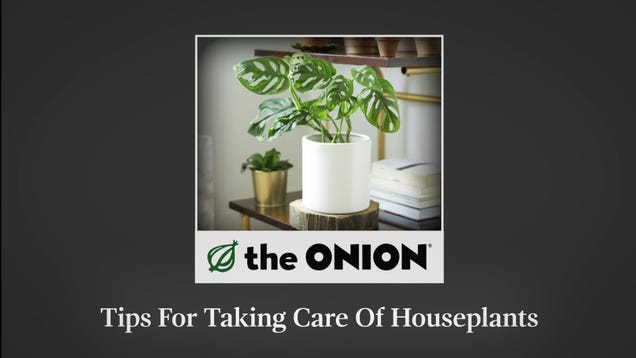 Tips For Taking Care Of Houseplants
