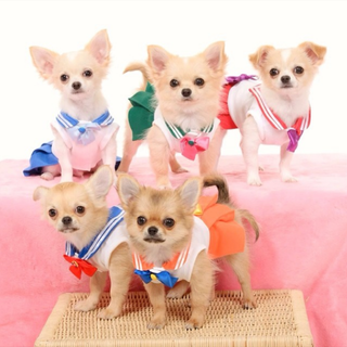 Illustration for article titled Small Dogs Cosplaying as Sailor Moon Characters