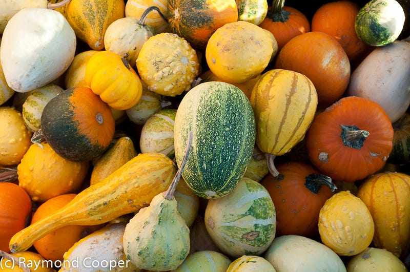 Illustration for article titled Has anyone created a blog about having sex with melons and gourds yet?