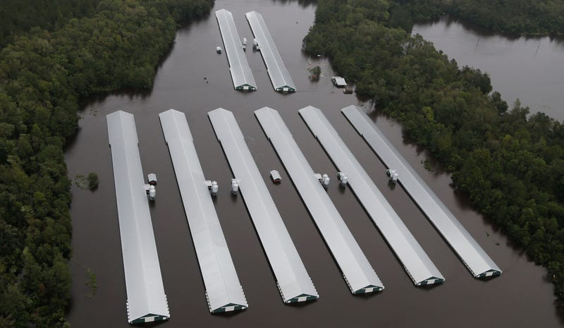 Chicken farm buildings are inundated with floodwater from Hurricane Florence near Trenton, North Carolina.