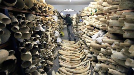 Man Who Dedicated Life to Killing Elephants Killed By Elephant
