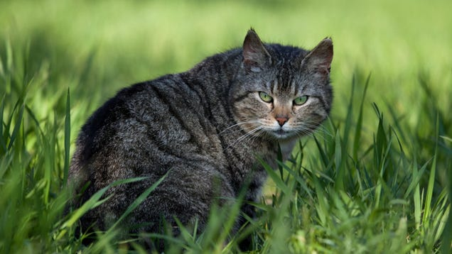 Domestic cats are destroying the planet