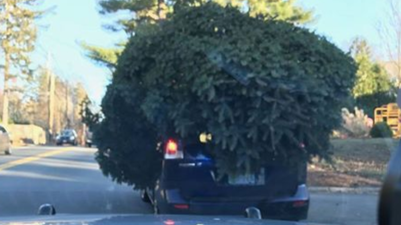 Police stop tiny vehicle with giant Christmas tree