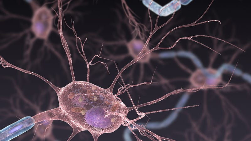 CRISPR-Cas9 gene editing working its way into motor neurons. Image: Chris Bickel/AAAS