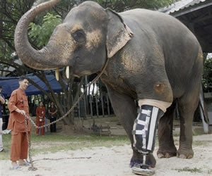 Illustration for article titled Beware Thailand's Cyborg Elephant Army