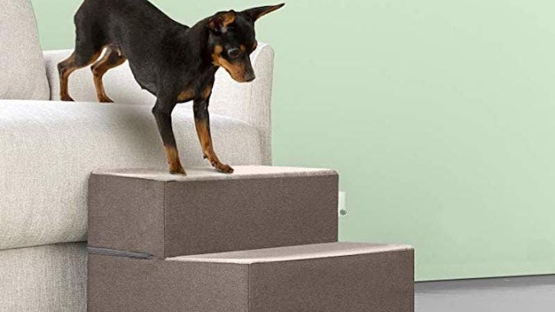 Help Your Senior Dog Get On And Off The Couch With These