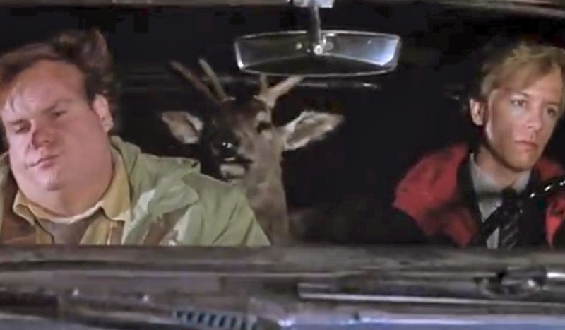 Illustration for article titled Roadkilled Deer Comes Back From The Dead To Terrify A Policeman