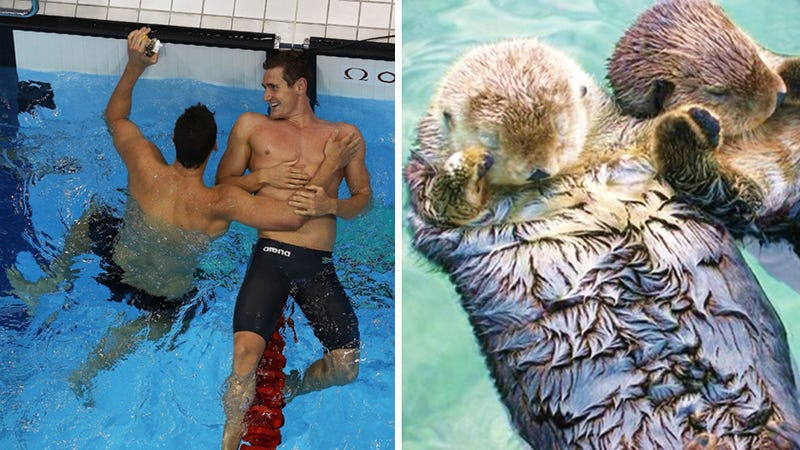 Illustration for article titled This Thing Looks Like That Thing: Adorable Olympic Swimmers vs. Hand-Holding Otters