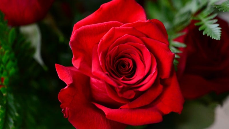 SFF Net traditionally placed a rose at the top of the site when someone of interest to the group died. / slgckgc/Flickr