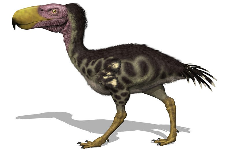 Illustration for article titled Newly Discovered Terror Bird Sheds Light On A Fearsome Clan
