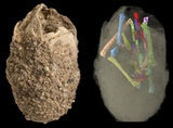 Illustration for article titled Powerful 3D Imaging Tools Reveal Ancient Secrets