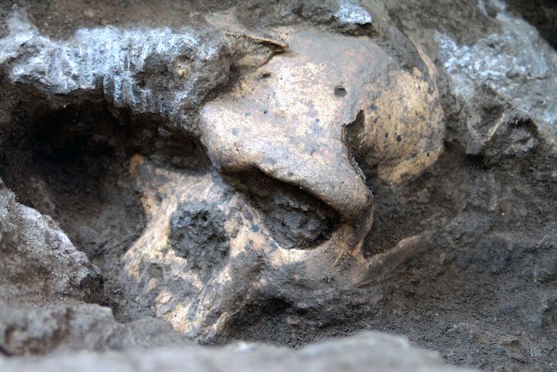 Este cráneo podría reescribir la teoría de la evolución humana