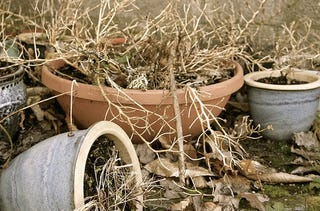 how to tell if plant roots are dead