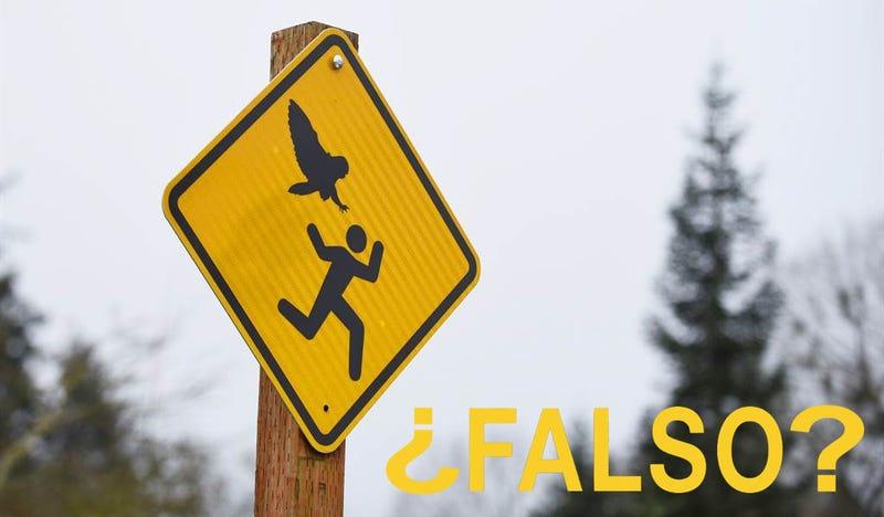Illustration for article titled 9 fotos virales que parecen falsas, pero son completamente auténticas