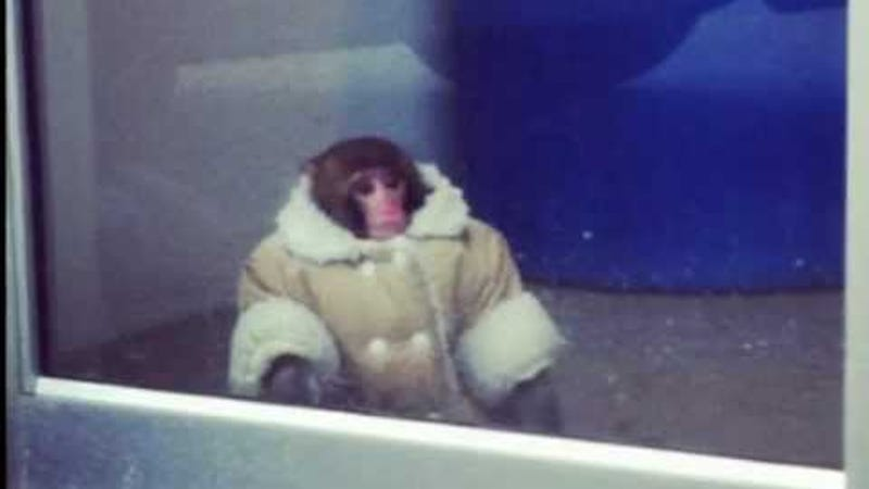 Illustration for article titled ​Custody Battle Over Ikea Monkey Ends in Heartbreak