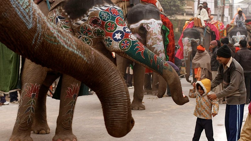 Illustration for article titled This Kid Is Totally Not Intimidated by Fancy Face-Painted Elephants