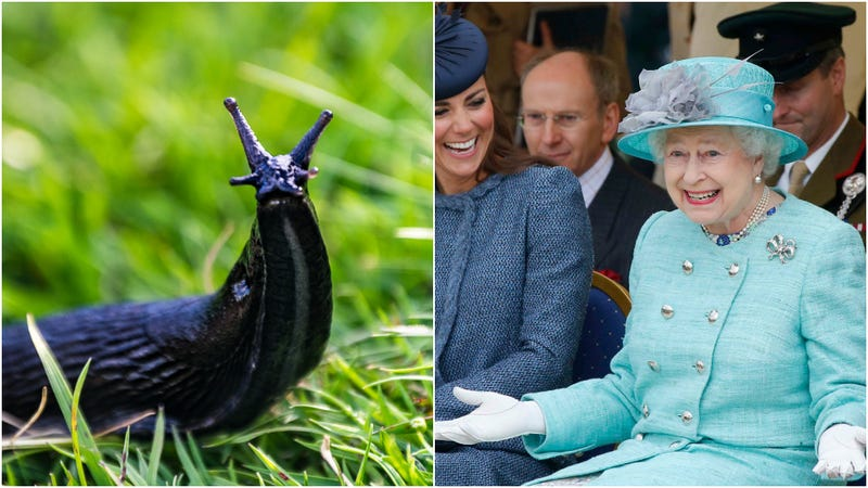 Illustration for article titled Queen Elizabeth found a slug in her salad one time