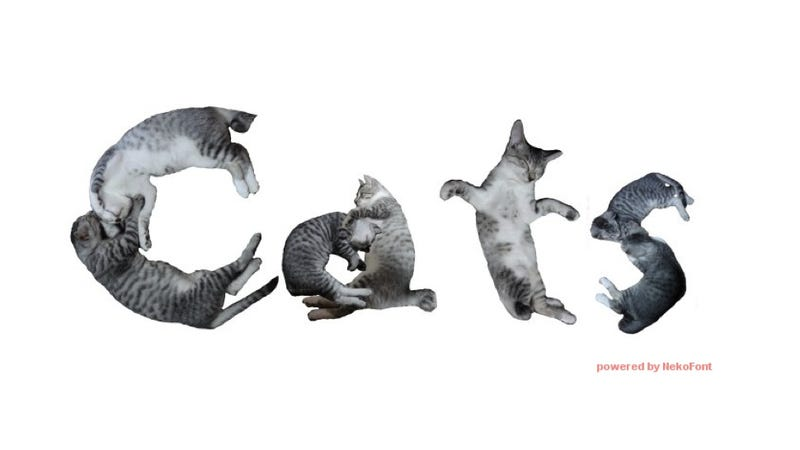 Illustration for article titled Write with Cats. Actual Cats.
