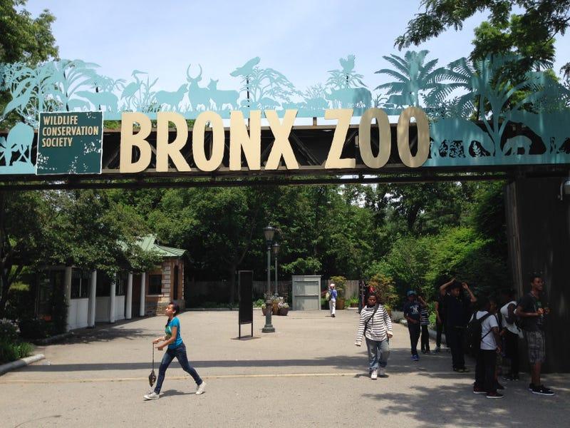 Αποτέλεσμα εικόνας για the bronx new york zoo