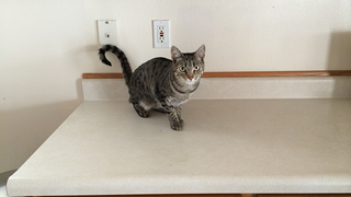 """Illustration for article titled Keep Cats Off the Counter with a """"Yes"""" for Every """"No"""""""