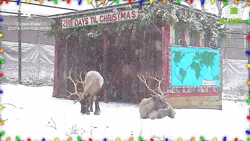 Illustration for article titled Animal Planet's live reindeer cam isn't creepy or intrusive in the least