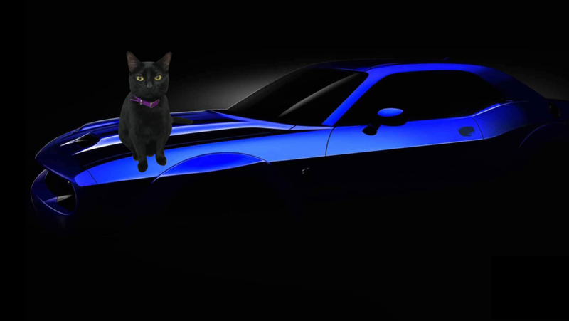 Illustration for article titled It's About Time We Make Some Optional Car Packages for Cats