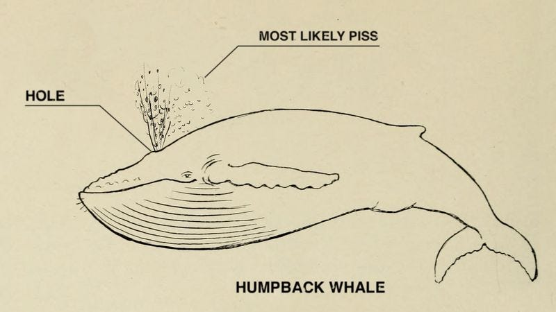 A whale and its piss hole.