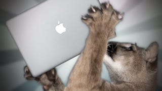 Illustration for article titled How to Prepare Your Mac for Mountain Lion