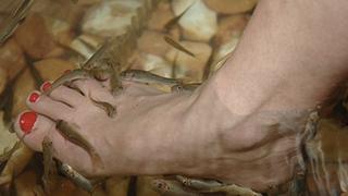 Illustration for article titled Revolting Fish Pedicures Under Investigation
