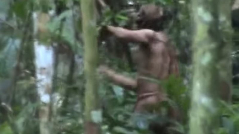 Illustration for article titled To Protect Lone Survivor of Decimated Amazon Tribe, Group Releases Footage Proving He's Still Alive