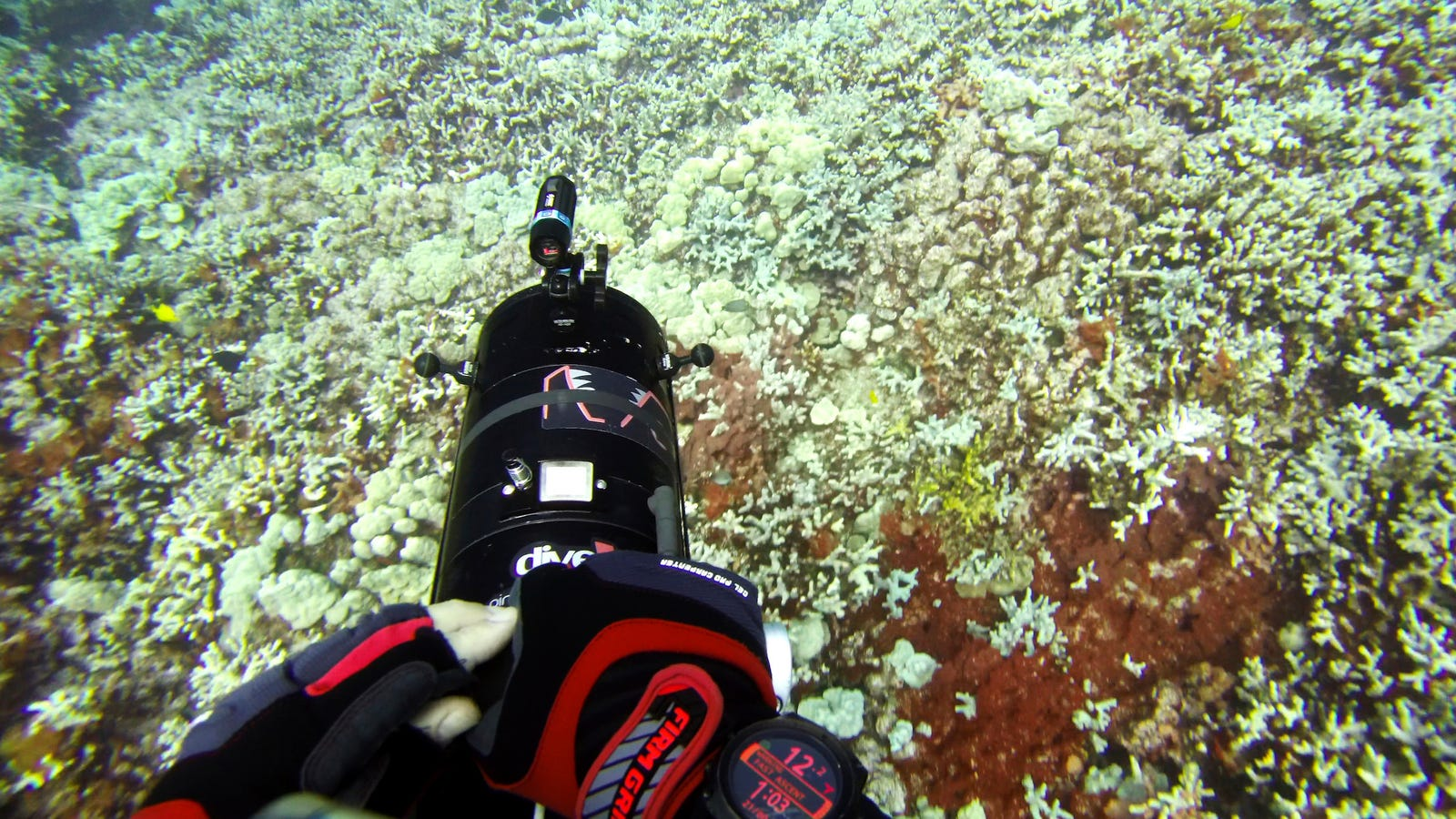 Hot Oceans Are Raising the Risk of Coral Bleaching Around the Globe