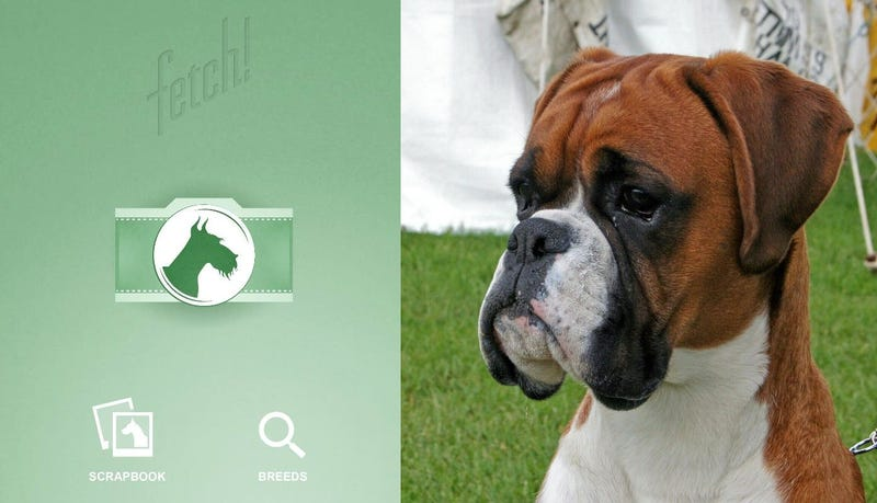 Illustration for article titled Averigua de qué raza es tu perro con esta nueva aplicación de Microsoft