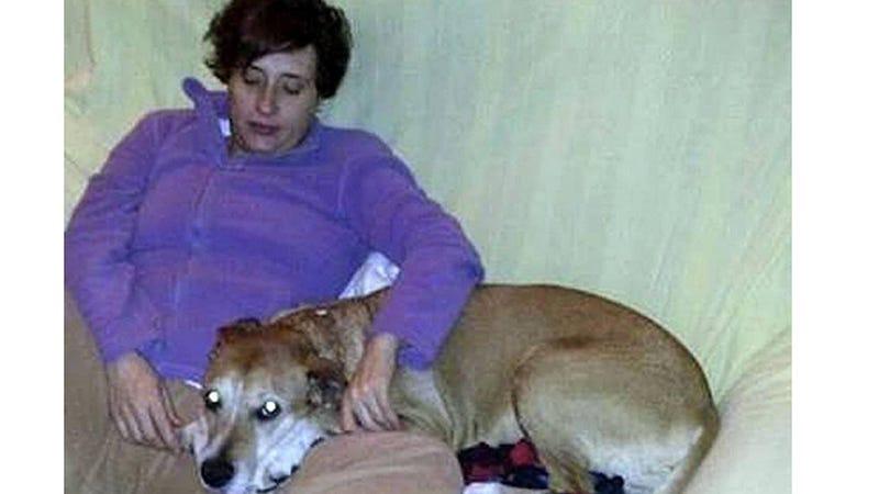 Illustration for article titled Spanish Nurse Is Ebola-Free, Family Pet Euthanized Despite Protest