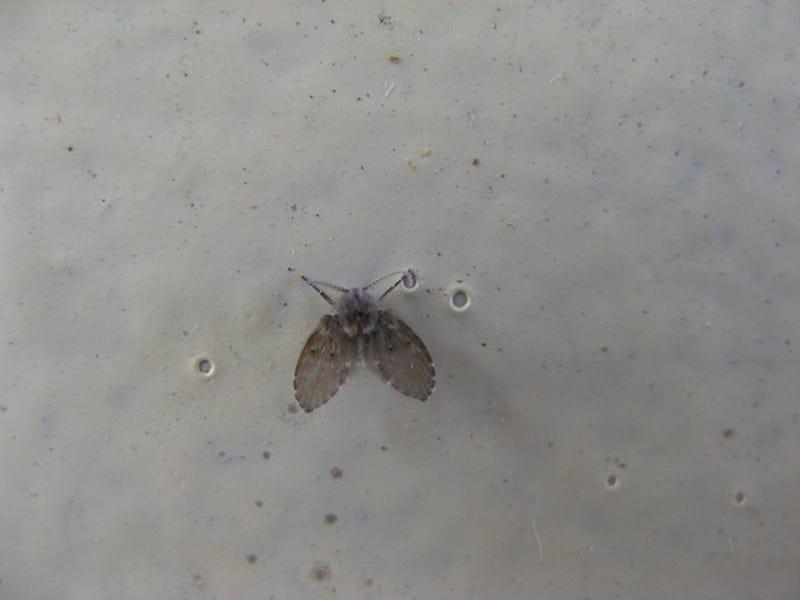 exceptional Small Flies In Kitchen Sink #4: Lifehacker