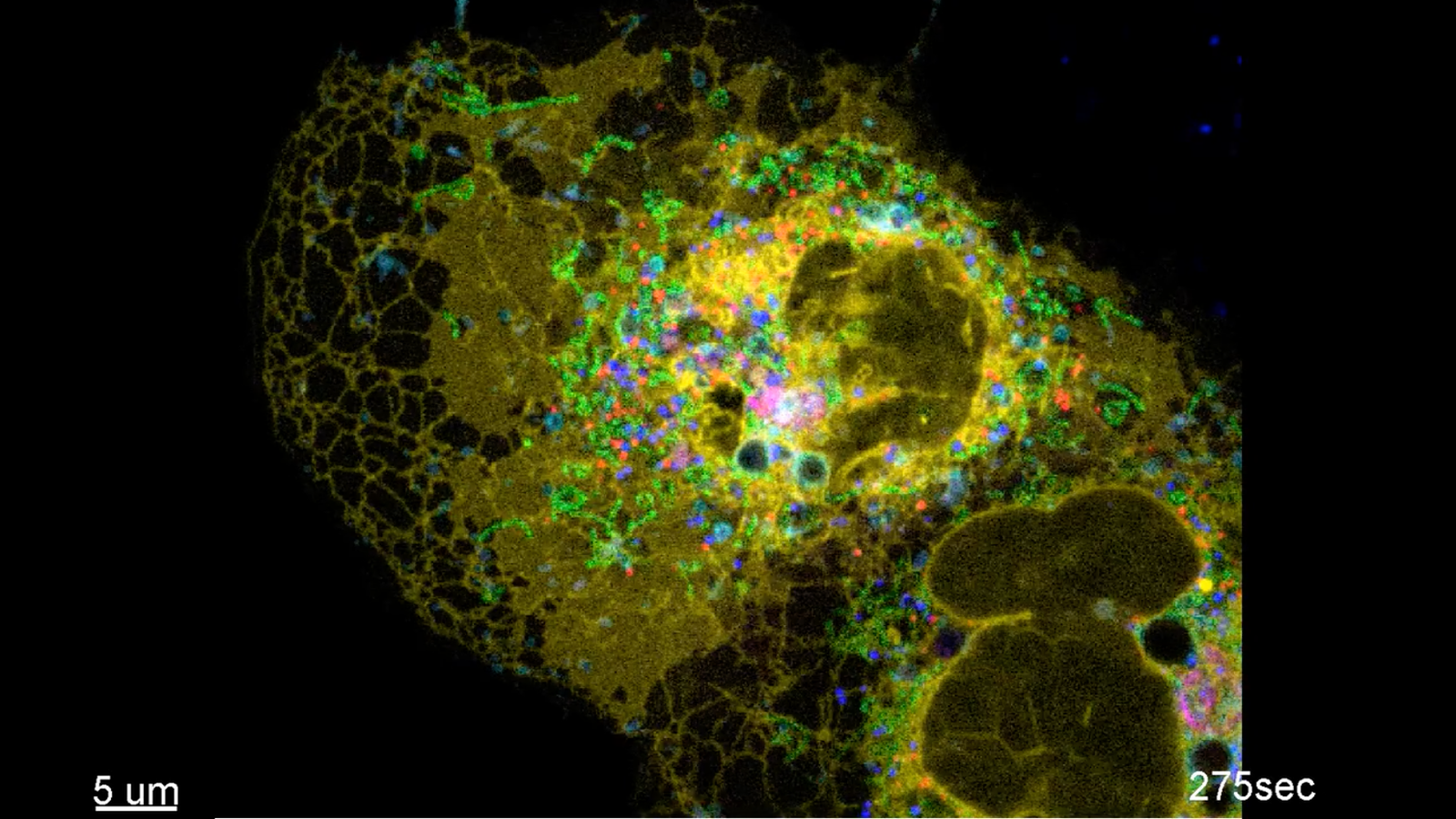 This Is the Most Complex Video of a Real Cell Ever Made