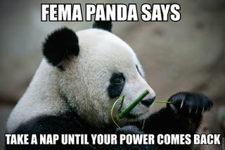 Illustration for article titled FEMA Panda will relieve your hurricane woes.
