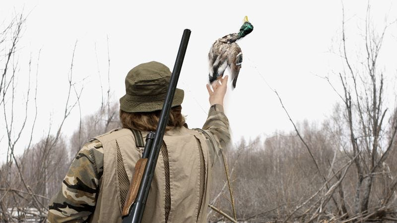 Illustration for article titled Ethical Hunter Throws Duck He Shot Back Into Sky
