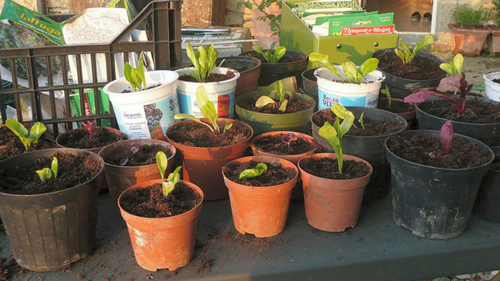 Save Water in Your Garden with Nested and Non-Porous Pots