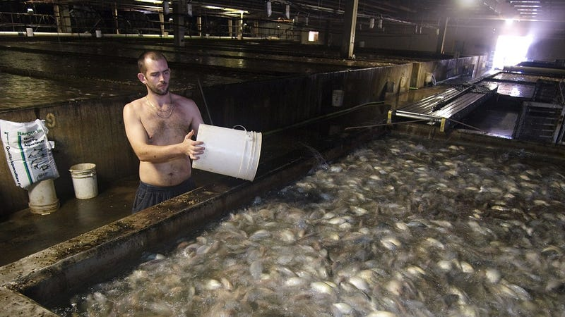 Illustration for article titled How To Raise Four Million Pounds of Fish a Year—in Virginia