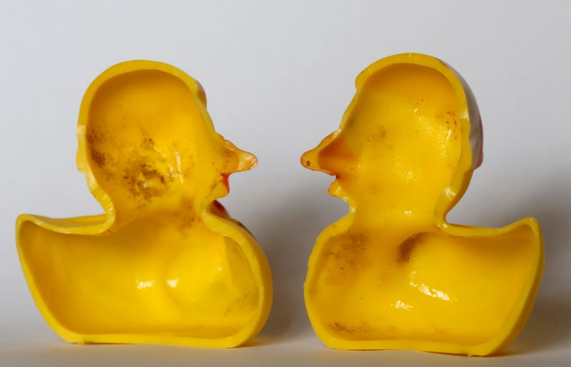 Illustration for article titled Study Finds Rubber Ducks to Be Breeding Ground for 'Potentially Pathogenic' Bacteria