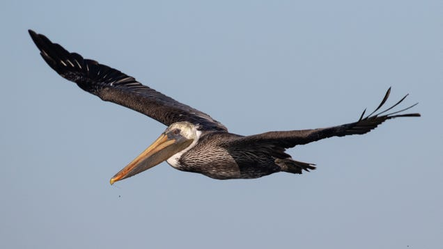 Report Finds Nearly Two-Third of America s Birds Vulnerable to Extinction From Climate Change