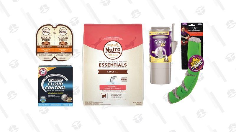 Gold Box de productos básicos para gatos   Amazon