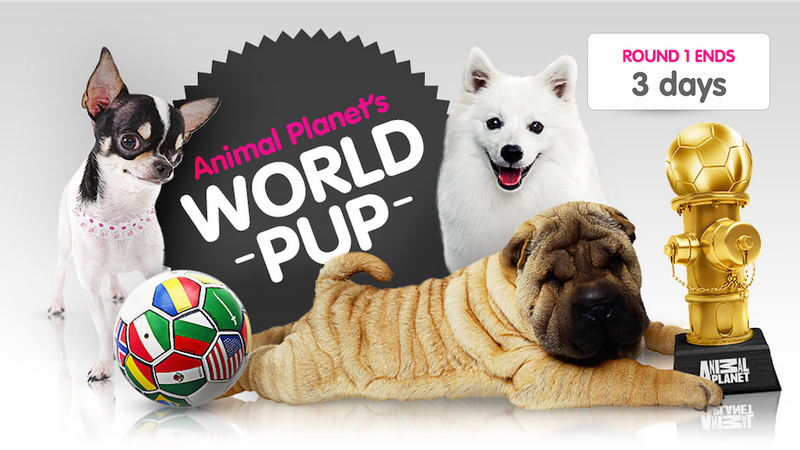 Illustration for article titled Animal Planet's Response to the World Cup?  The World Pup.