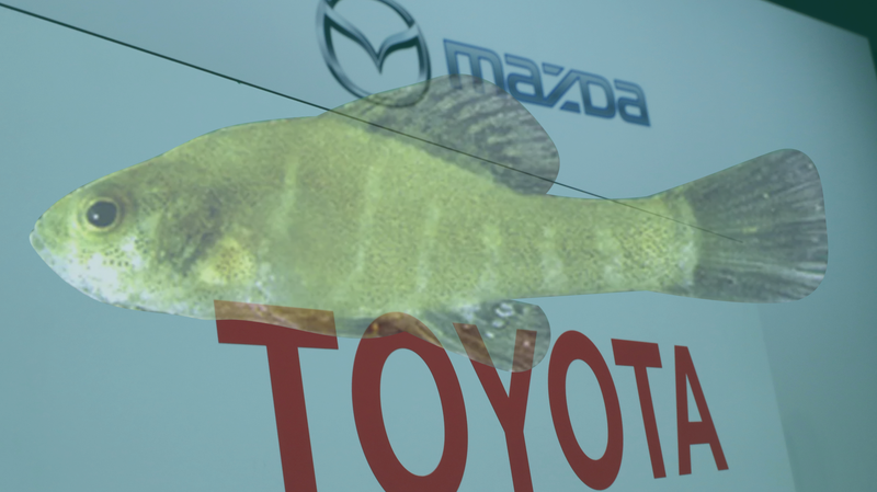 Illustration for article titled Toyota and Mazda Agree to Pay $6 Million to Protect Tiny Fish Near New Alabama Manufacturing Plant