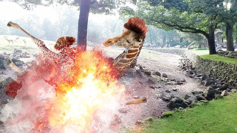 Illustration for article titled Absolutely Perfect: The San Diego Zoo Just Totally Stuck It To Donald Trump By Putting An Orange Wig On A Giraffe And Blowing It Up With Dynamite