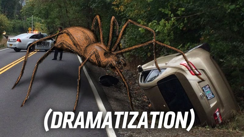 Arachnid causes auto crash in Oregon