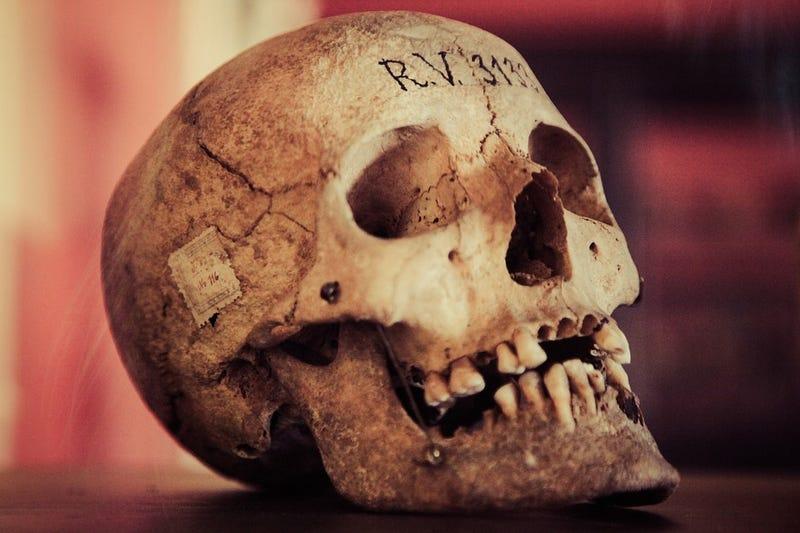 Por qué no puedes quedarte con el cráneo de tu abuelo recientemente fallecido para guardarlo en casa