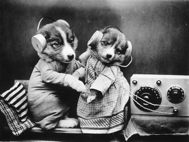 Illustration for article titled Dogs Listening to the Radio Will Cure Your Case of the Mondays