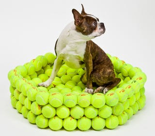 Illustration for article titled Dog Bed Made From Tennis Balls Provokes Chewy Dreams