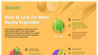 Illustration for article titled This Infographic Tells You What to Look For When Buying Vegetables